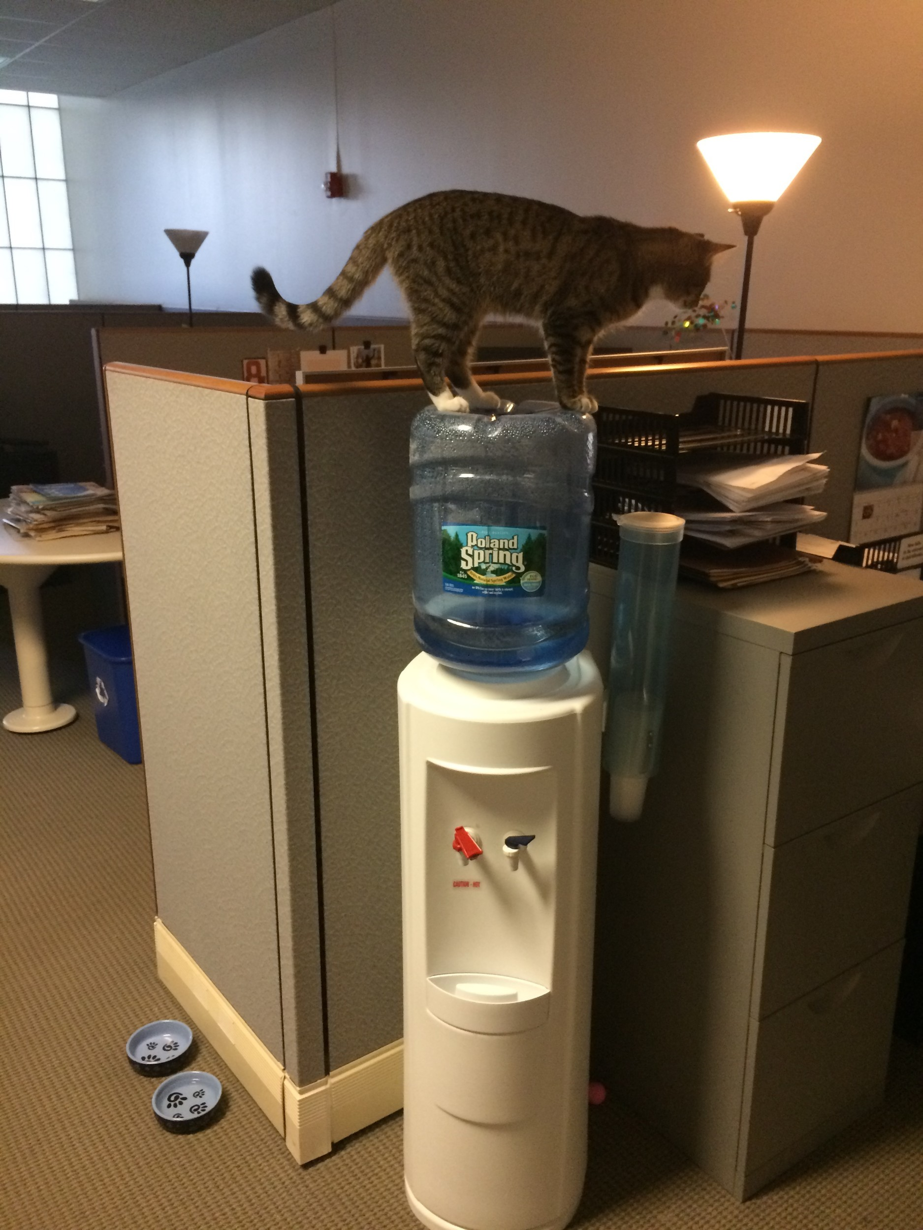 Hanging out at the water cooler waiting for company. . .