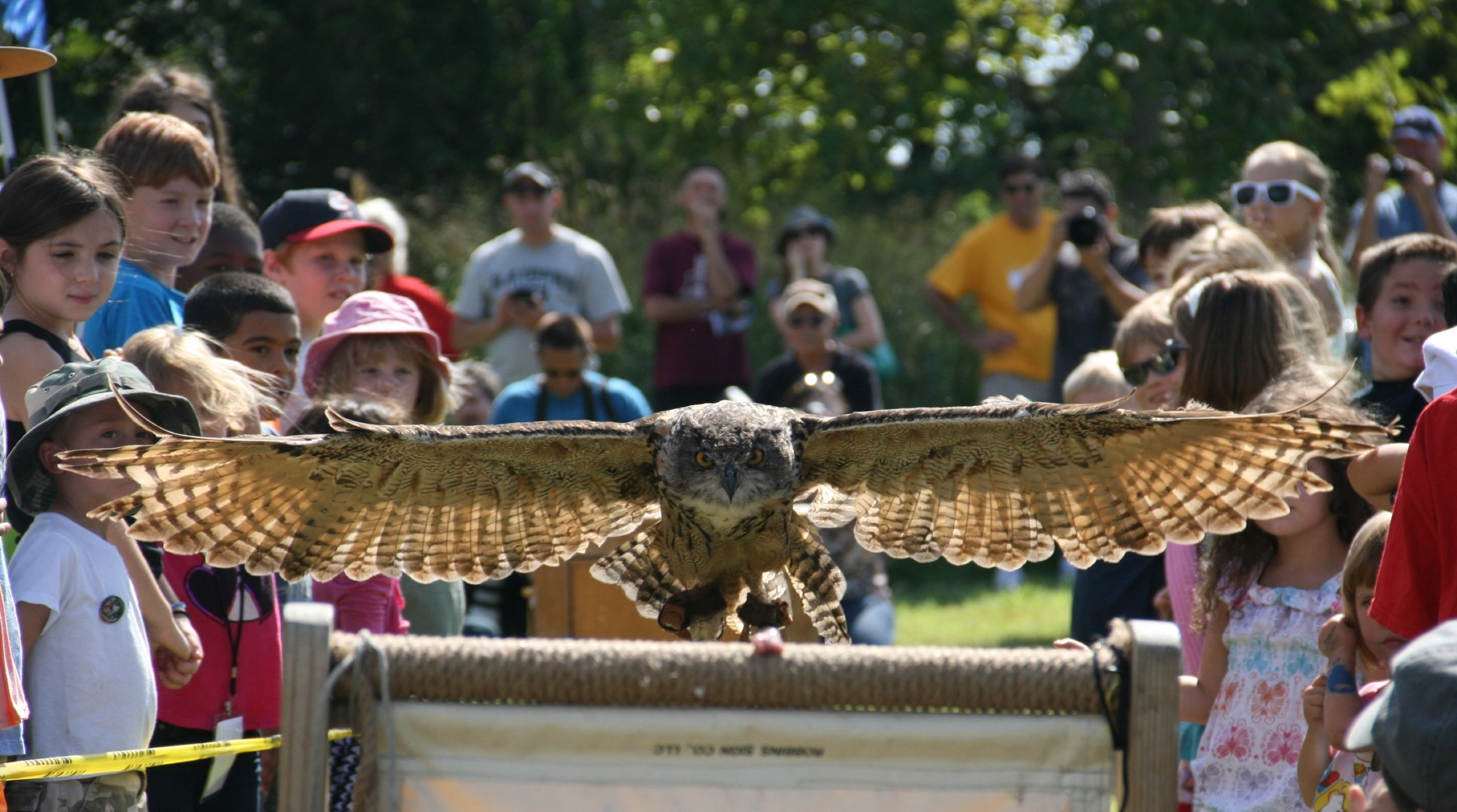 European Eagle Owl Spreads its Wings
