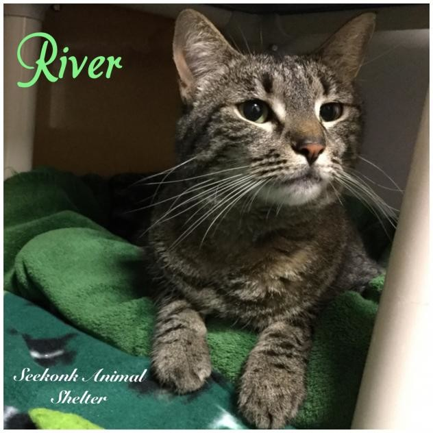 Seekonk Animal Shelter pet of the month--River