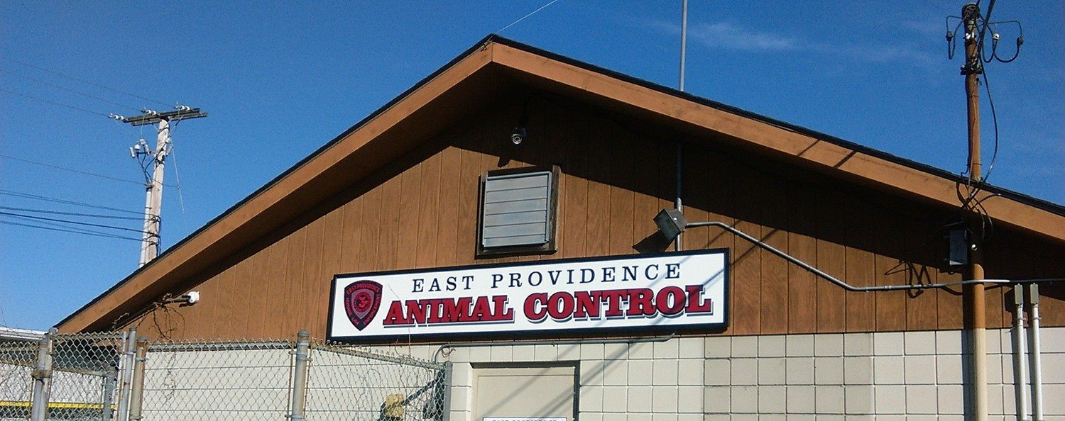 Over 40 animals were removed from the residence and are currently quarantined at Animal Control.