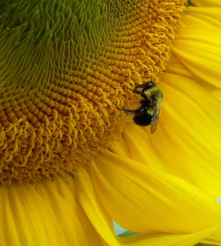 Audubon Celebrates Pollinators in June Birds, Butterflies, and One ...