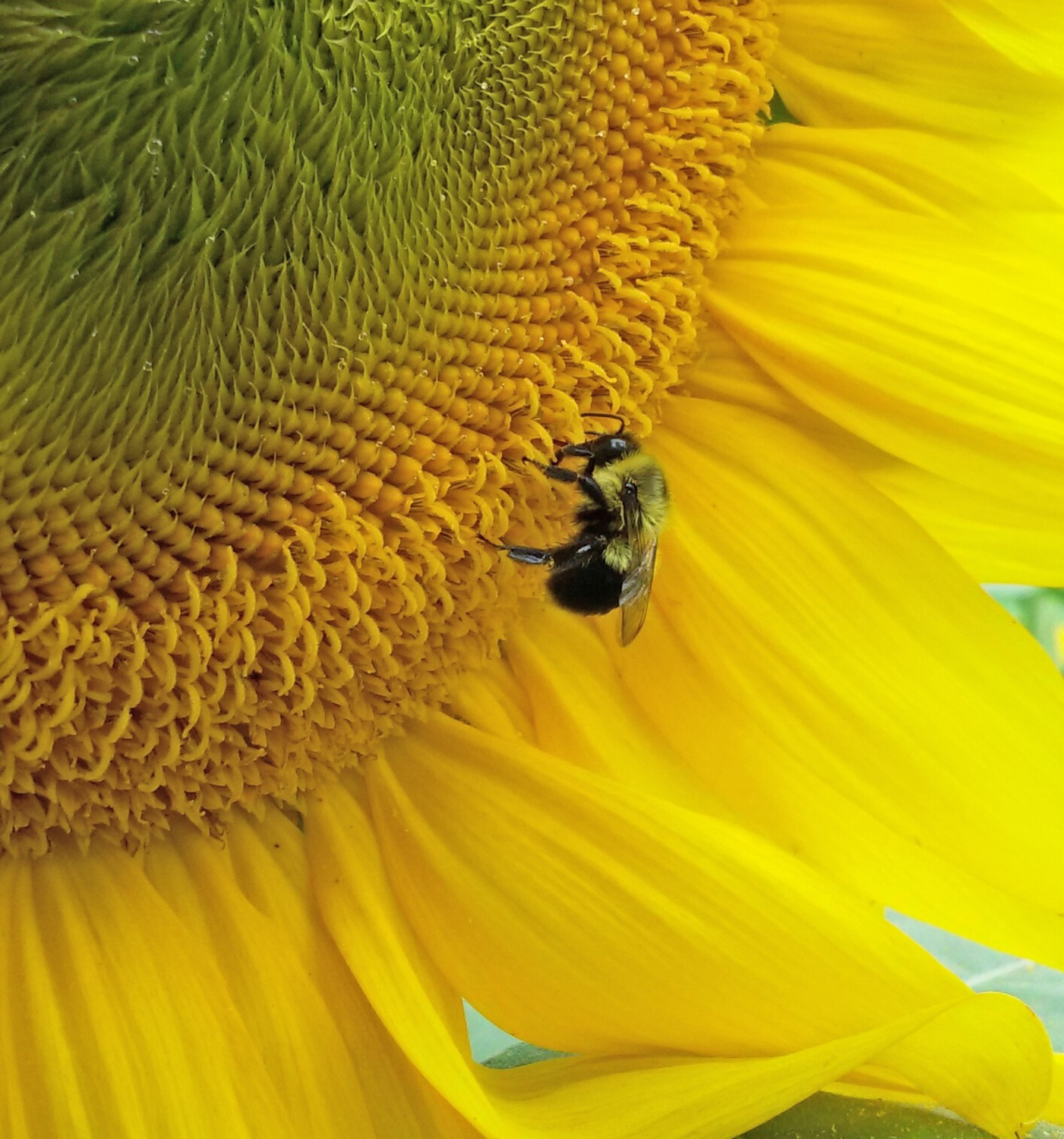 Rhode Island is Buzzing About Pollinators!