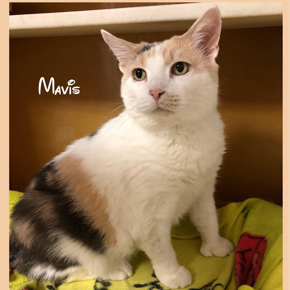 Mavis is waiting to meet you at the Seekonk Animal Shelter.