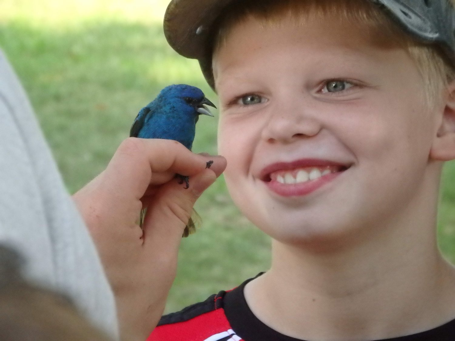 A child gets up close with an Indigo Bunting during a bird banding demonstration at the Audubon Nature Center and Aquarium.