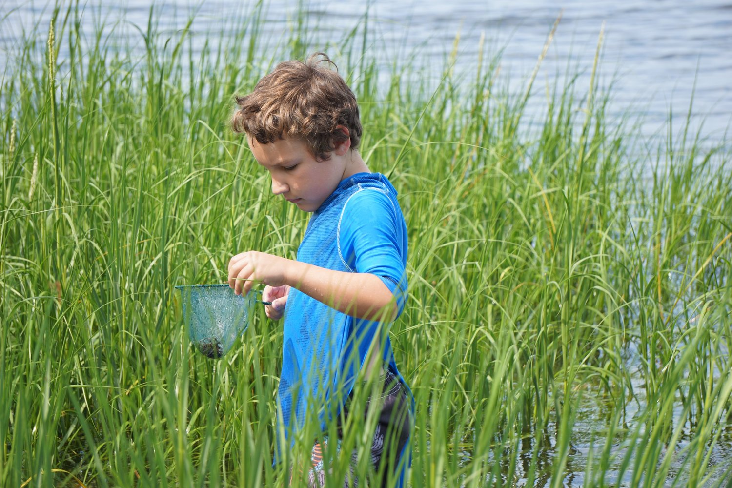 Shore Hike with Audubon, July 11, 2019 at the Audubon Nature Center and Aquarium in Bristol.