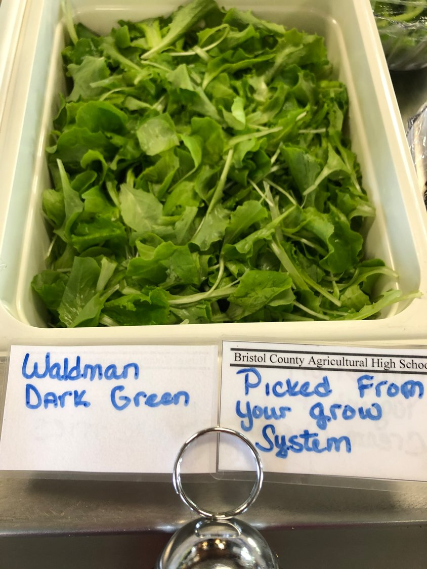 Students were offered Waldman Dark Greens for their daily salad option.