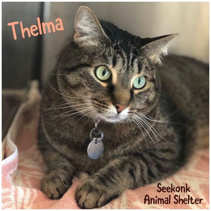 Stop by to visit Thelma at the Seekonk Animal Shelter