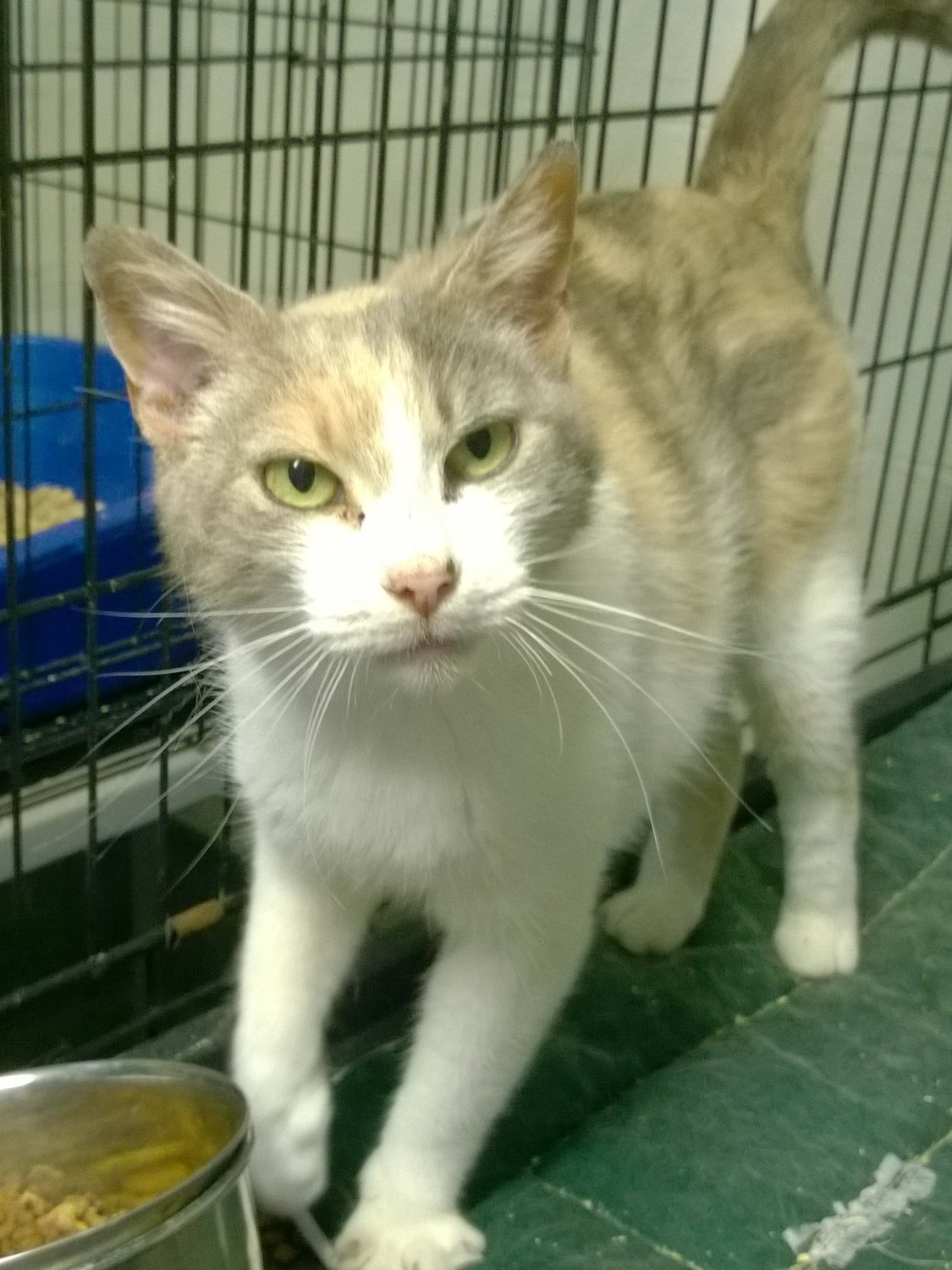 Come meet Princess at the Rehoboth Animal Shelter.