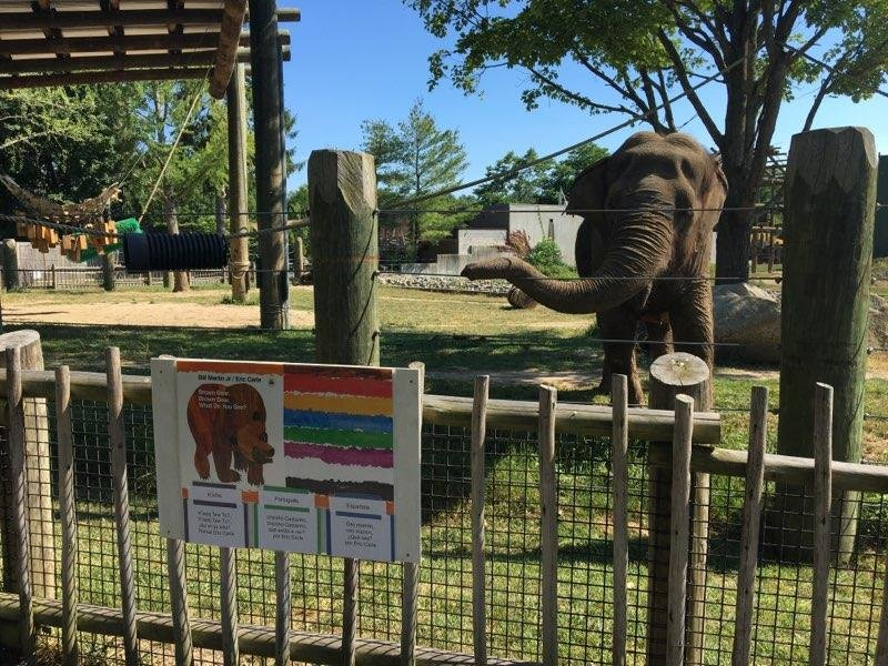 BPZOO's Asian elephant, Emily, standing behind the newly installed StoryWalk®