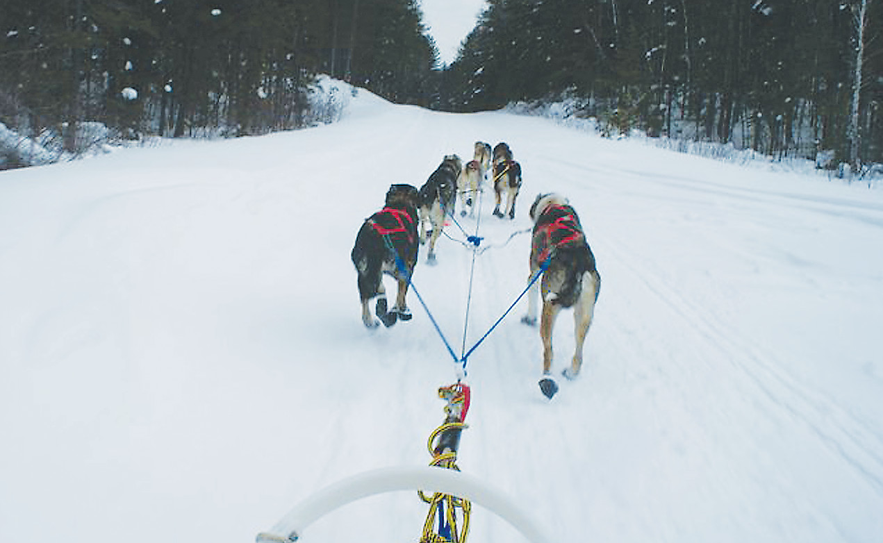 Trail conditions should be excellent for the Wolf Track Classic Sled Dog race, set for Feb. 24.
