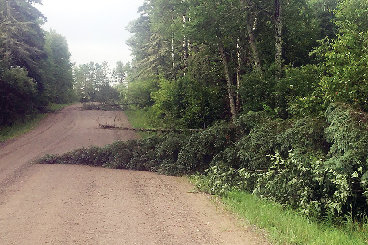 Trees down on Holter Rd in rural Tower