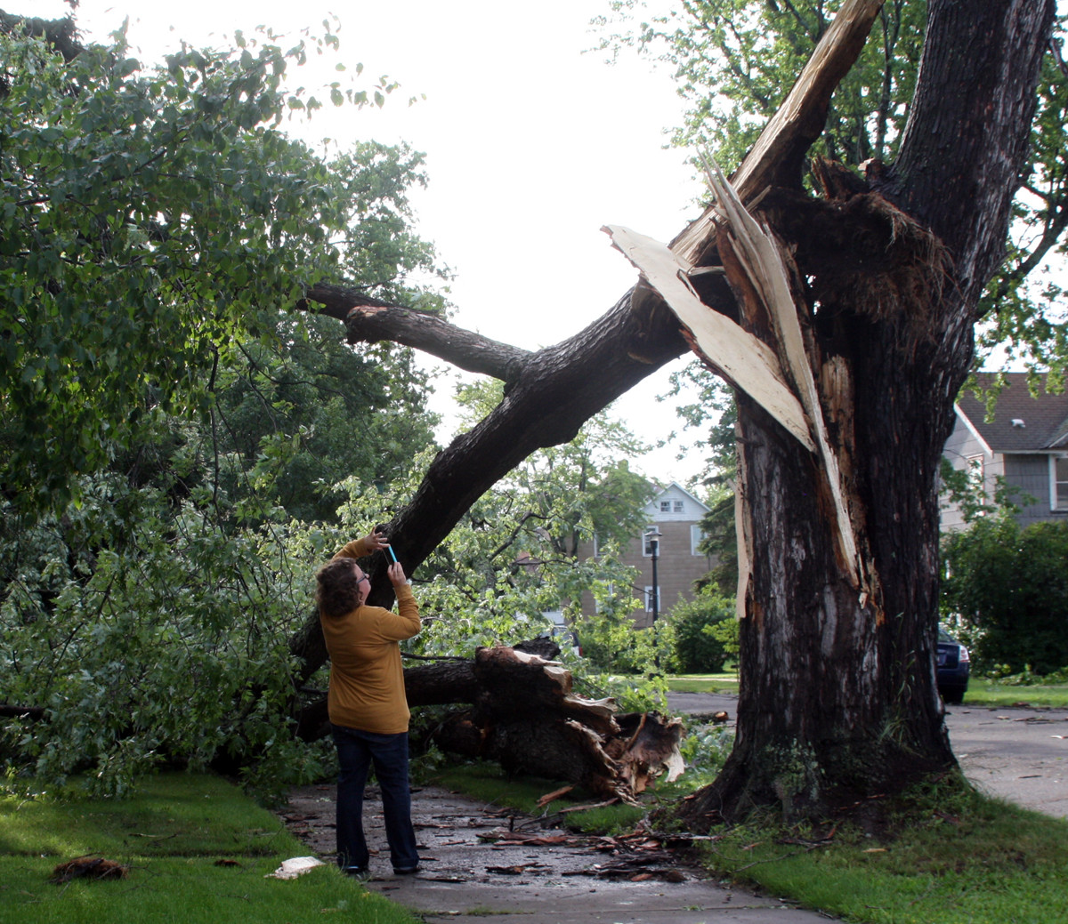An Ely resident snaps a photo of a huge broken maple on Conan Street. Ely was particularly hard hit by the storm.