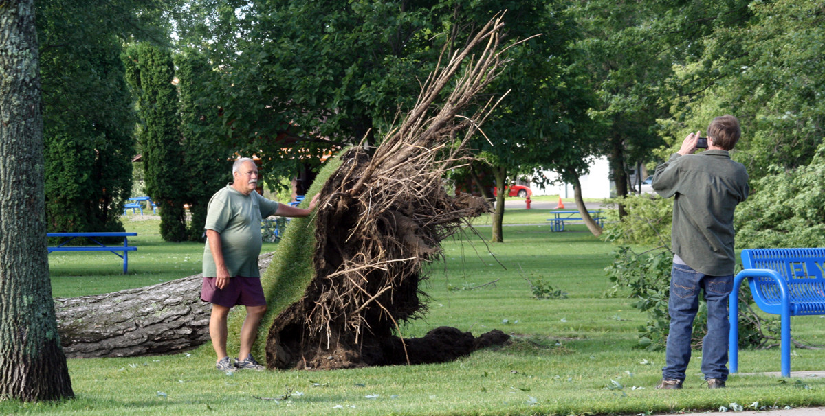Tree damage in Whiteside Park was significant, just a week ahead of the Blueberry/Art Festival.