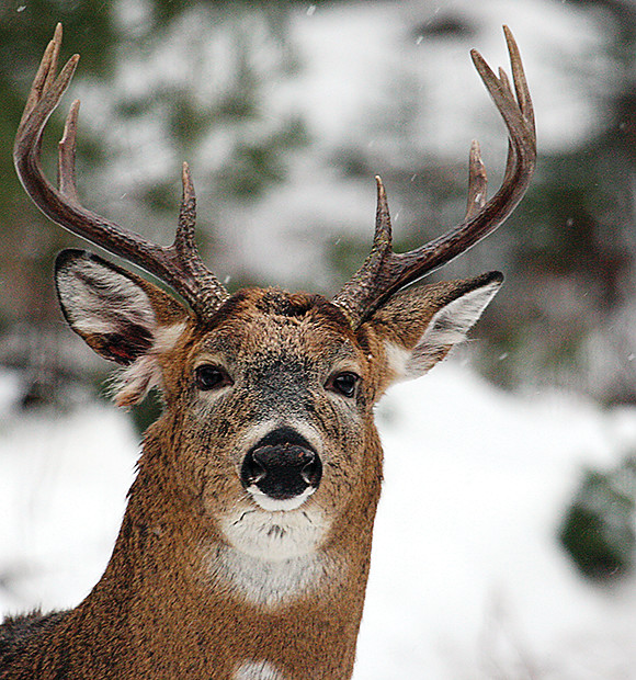 The DNR sets a statewide annual harvest goal of 200,000 deer in its new draft