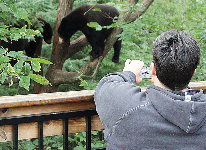 From the sanctuary's elevated deck, the public can watch wild black bears feed, climb trees, and interact, with complete safety. The sanctuary is open to the public Tues.-Sunday from 5-8 p.m.
