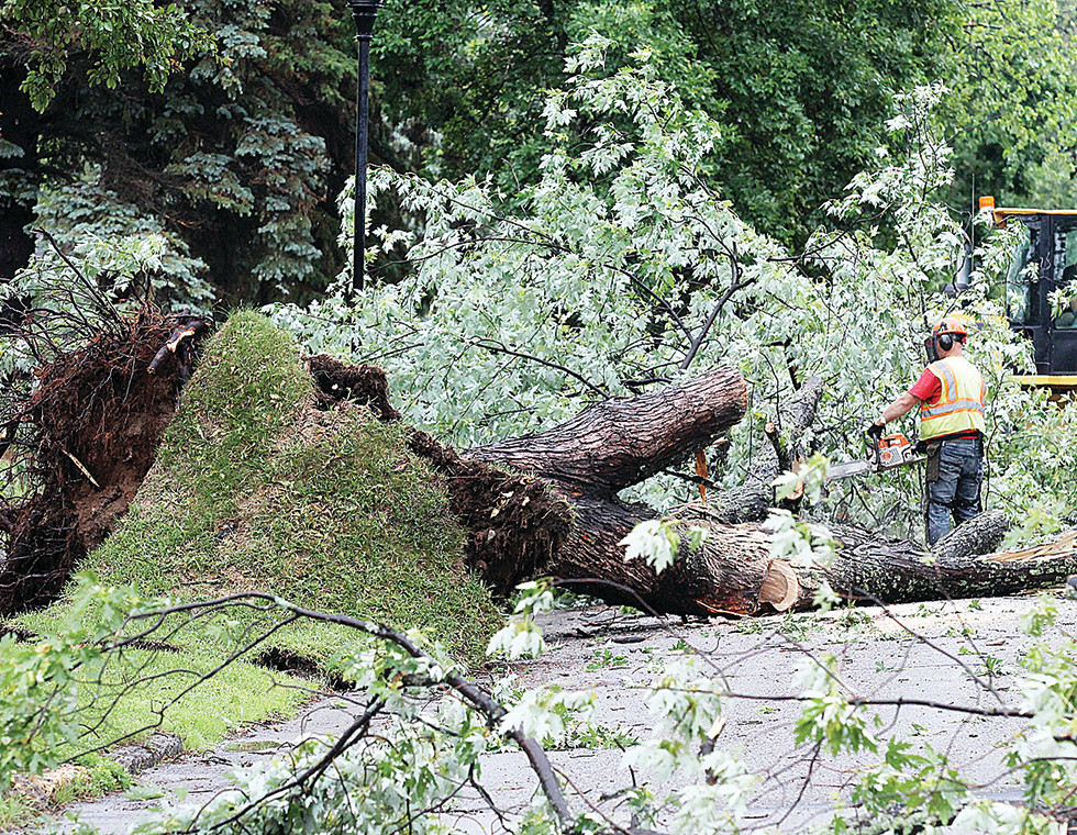 A city of Ely worker clears an uprooted maple tree Friday morning near James Street and Central Avenue.