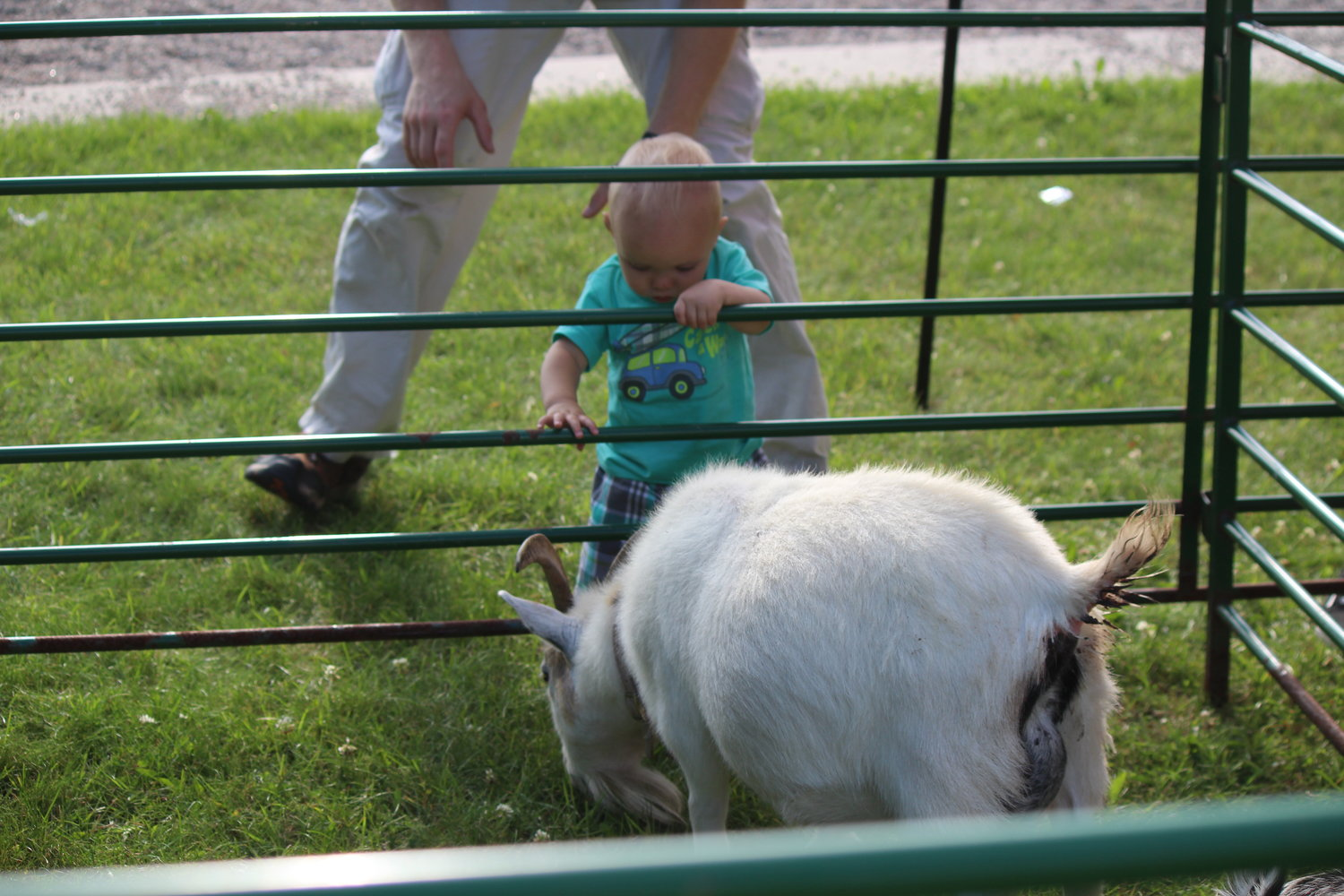 Timothy Carlson, almost 1-year-old of Cook, curiously observes goats at the Cook's Country Connection pop-up farm.