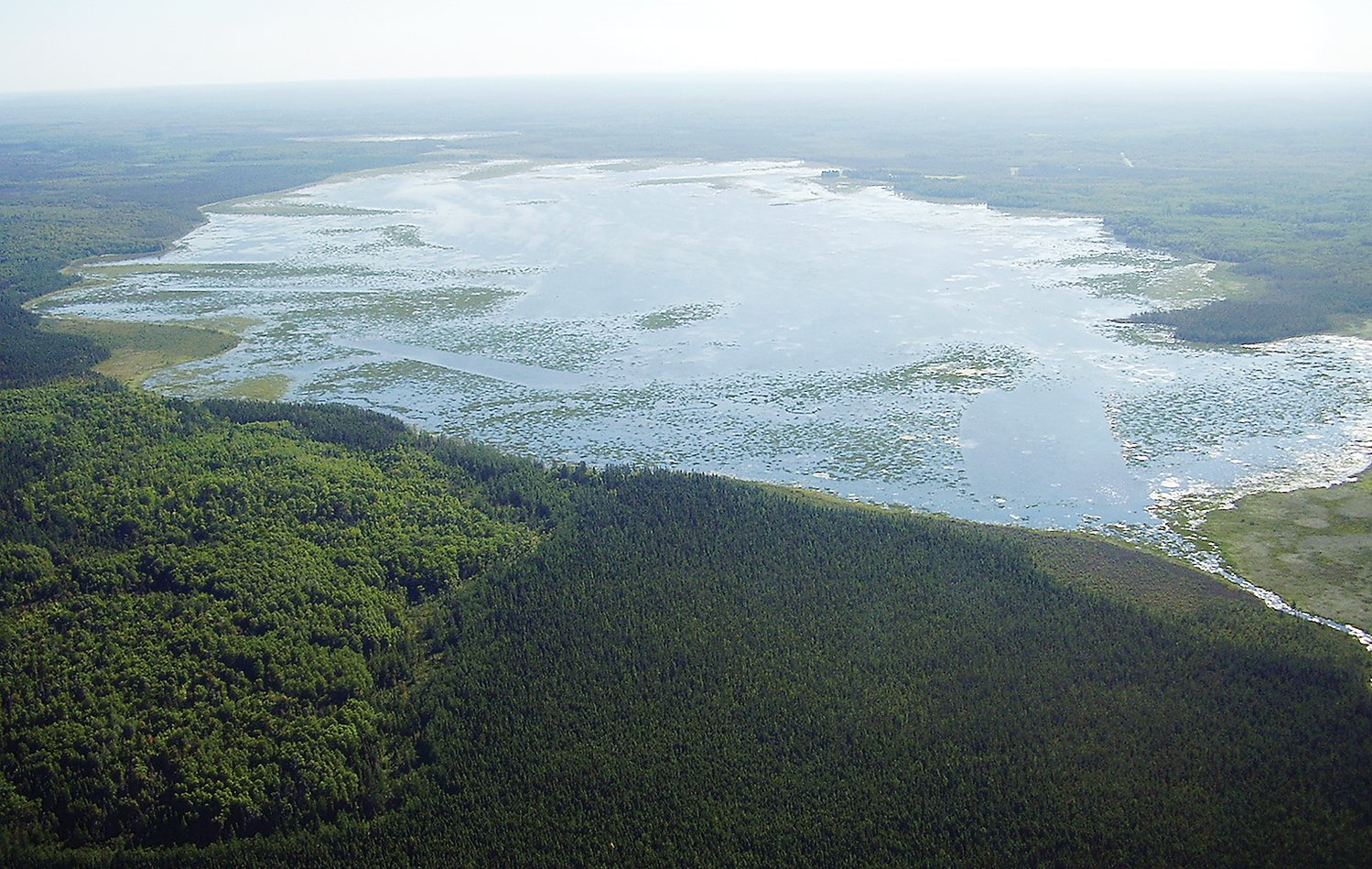 An aerial view of Big Rice Lake, once a premier wild rice lake in the region.