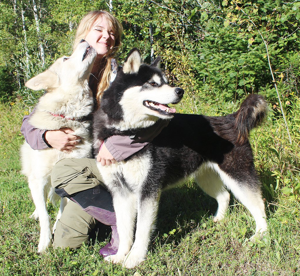 "shley Thaemert gives some extra attention to two of her Alaskan Malamutes, Kira and Saffron, at her rural Tower home. The two sled dogs are starring in a new movie, ""The Great Alaskan Race,"" based on the historic sled dog run to transport medical supplies."