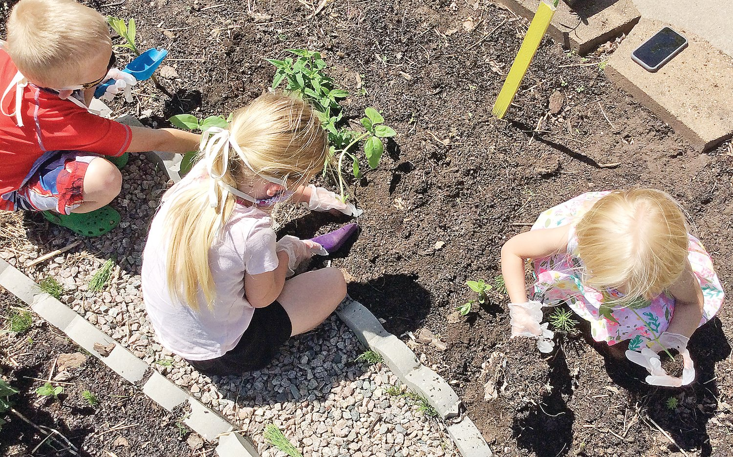 Students start planting.