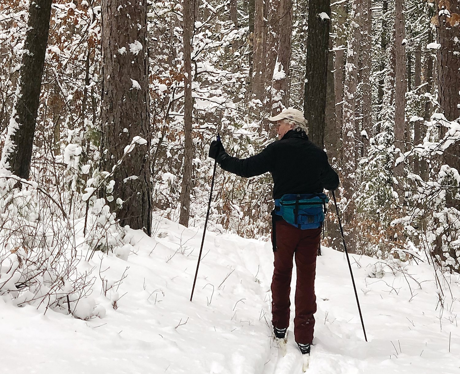 Skiing through miles of pine forest along the North Arm Trails.
