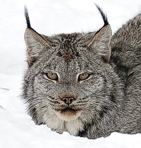 There are a number 