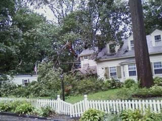 Tree on Overlook fell onto house.