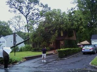 Wow...huge tree hits home in Cedars.