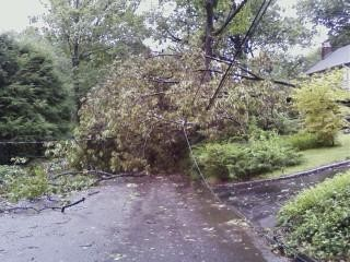 This tree is blocking the road on Bowers in Caldwell. No injuries reported.