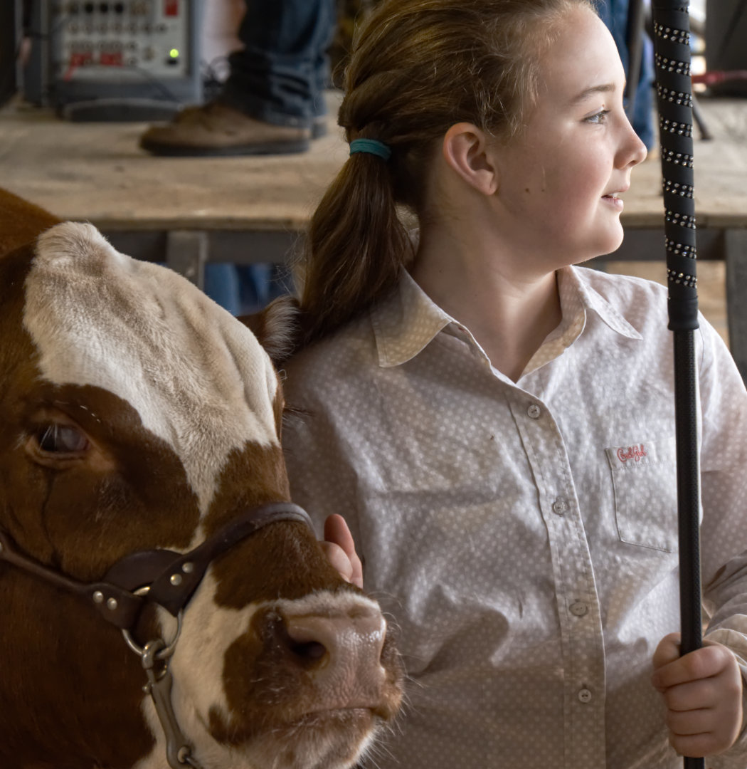 Kori Hammond of Quitman FFA with her cow at the Mineola Junior Livestock Show in the spring. (Monitor photo by Sam Major)
