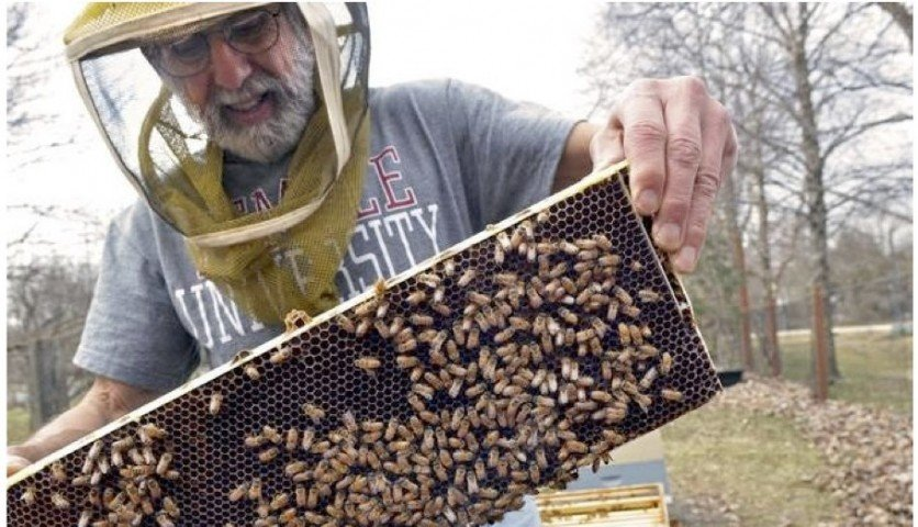 Vincent Aloyo, a beekeeper for over 45 years, has taught undergraduate beekeeping courses at area colleges and given countless talks to community groups, nature centers and schools about the importance of honeybees to our food supply.