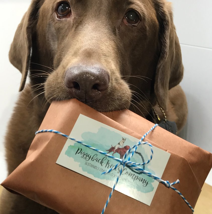 Piggyback Treats owner Jennifer Kirby's 10-year old chocolate lab, Candy, with a package from Piggyback.