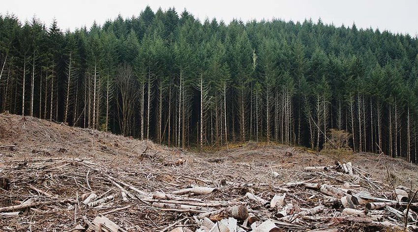 Clear-cut forests near Eugene, Oregon. Deforestation was the norm in the early part of the 20th century. We've spent the last 60 years working to protect and restore our forests. (Photo by Calibas, Wikicommons)