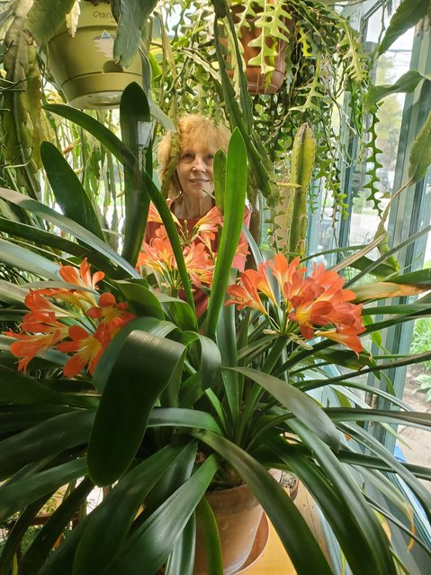 Valerie inspects a Clivia plant that is at least 50 years old.