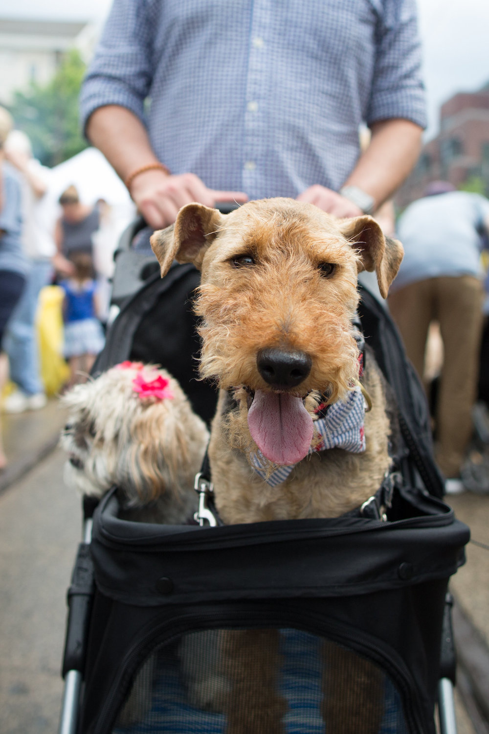 The Home & Garden Stroll, like past outdoor festivals in Chestnut Hill, is pet friendly. (Photos from a prior, pre-pandemic Home & Garden Festival, courtesy of the Chestnut Hill Business District)