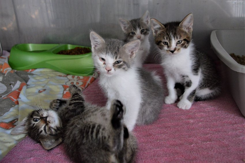 Adorable kittens at the Clare County Animal Shelter