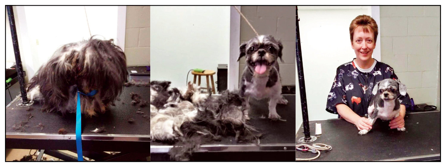 "Before, during, and after ""Daisy"" was groomed by Tammy Mitchell, owner-operator of Bark n Bathe."