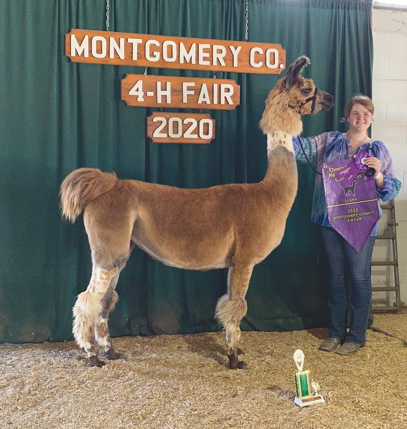 Megan Fruits, a 10-year 4-H member, pictured with Visitina, was named the overall grand champion showman and champion senior showman at the Montgomery County 4-H Llama Show. Fruits earned champion light wool and reserve grand champion halter animal as well as grand champion costume and champion senior performance.