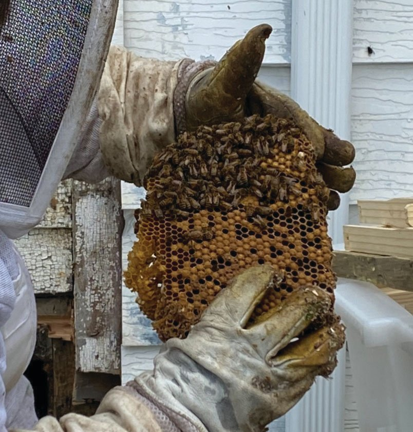 Debbie Froedge holds a honeycomb. People interested in beekeeping or the environmental impact of bees can join Montgomery County Beekeepers, which holds its next meeting at 6:30 p.m. March 10 at Davidson Greenhouse & Nursery.