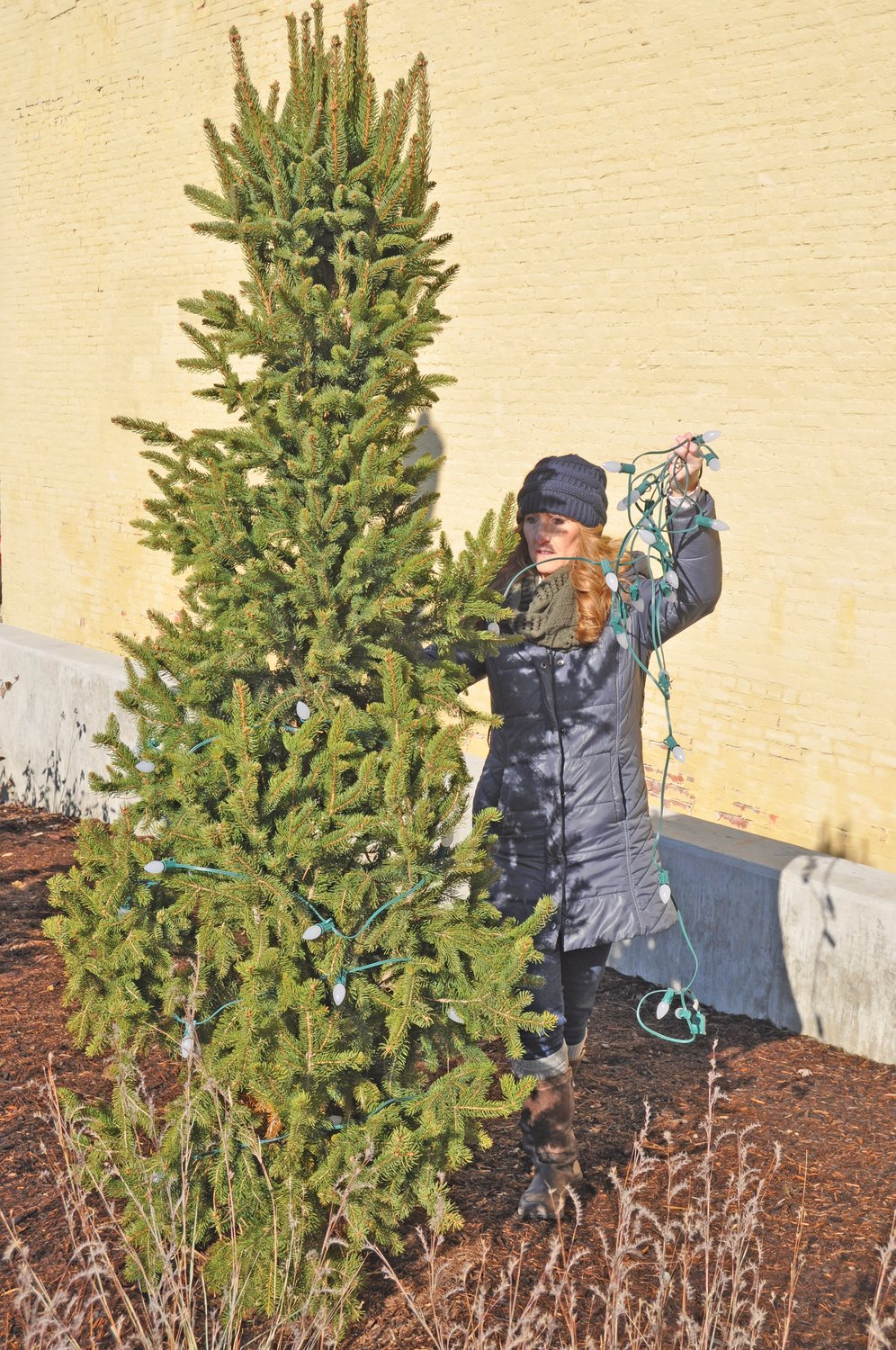 Kim Clark strings Christmas lights around a tree Friday at Pike Place. Crawfordsville Main Street were decorating the park for the holiday season.