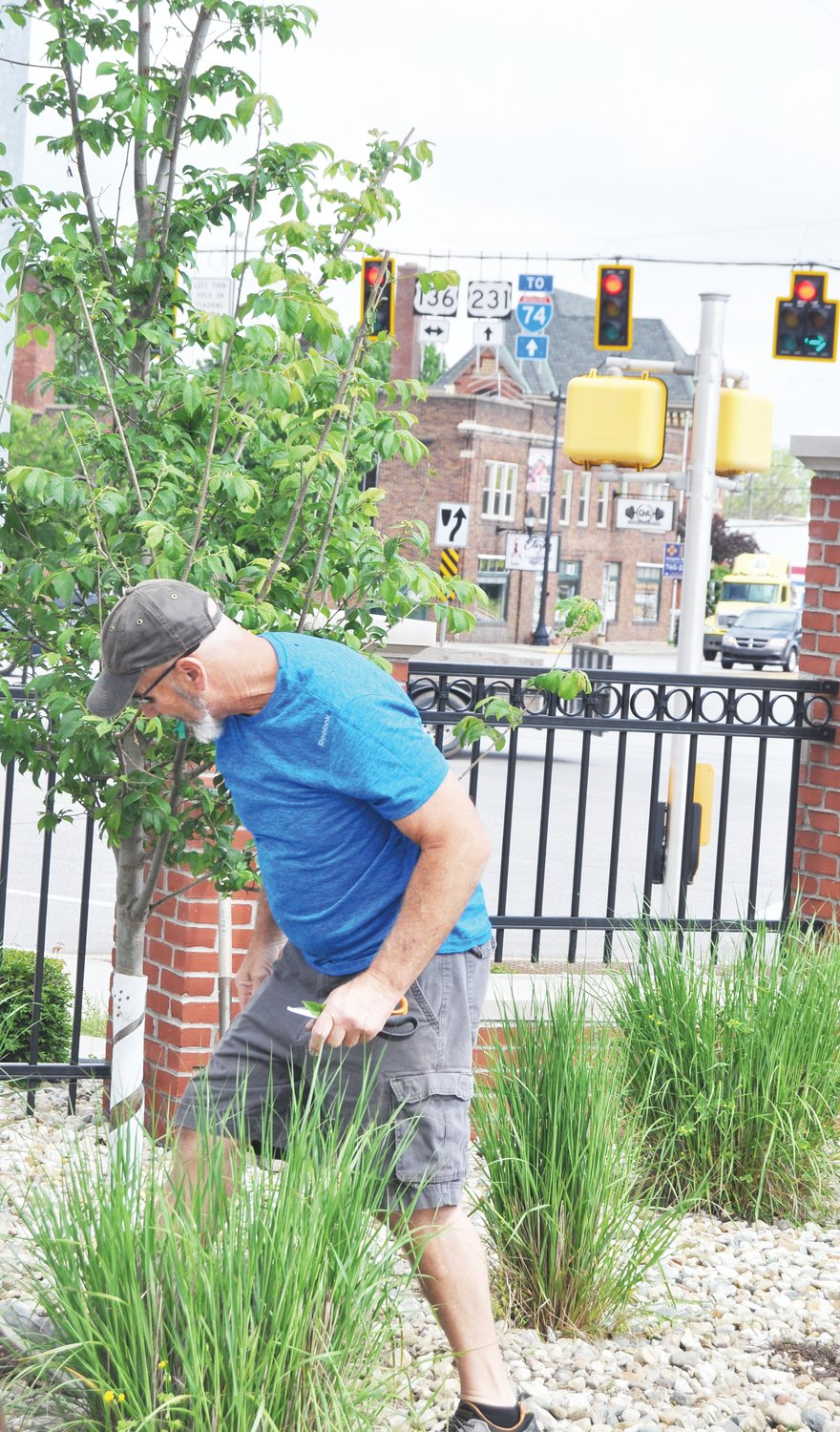 Mark Davidson, owner of Davidson Greenhouse & Nursery, spruces a freshly planted Patriot Elm tree Friday in the Montgomery County Courthouse parking lot. Crawfordsville Main Street procured the tree from Davidson and dedicated it to front-line workers in the COVID-19 pandemic.