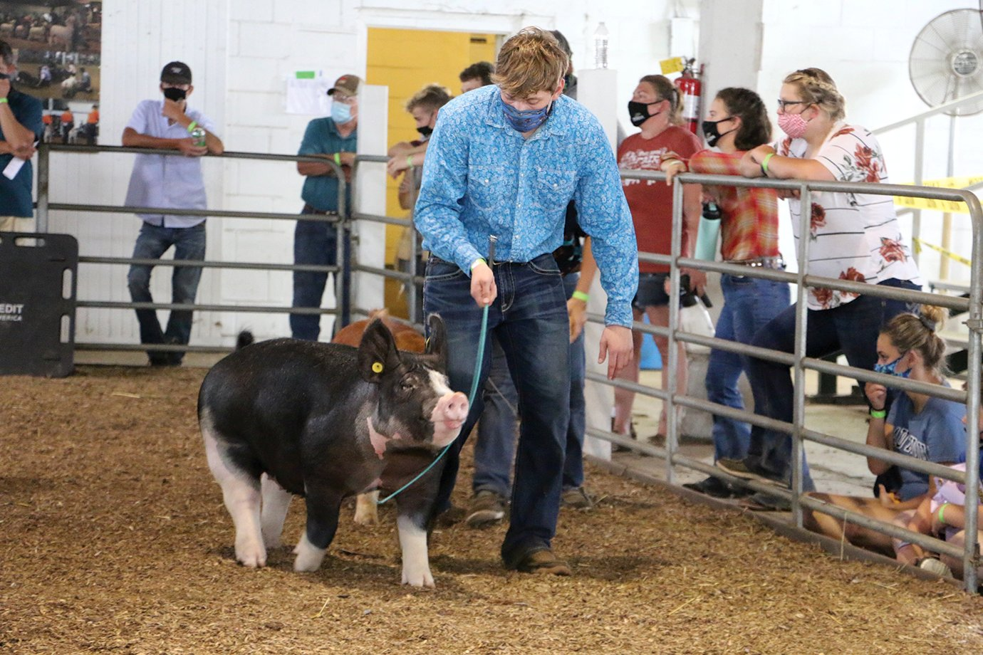 Collin Martin and his Reserve Grand Champion Gilt strut around the ring this weekend at the 2020 Montgomery County 4-H Fair. The 2020 4-H Fair marks the first time Southmont