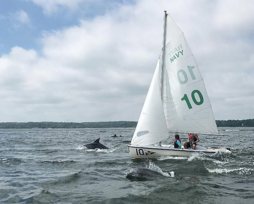 Dolphins swim near a sailboat not far from the University of Maryland's Chesapeake Biological Laboratory in Solomons.