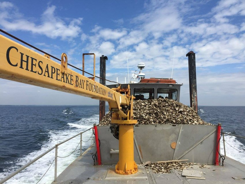 The Chesapeake Bay Foundation runs one of several regional oyster shell-recycling programs that collect and redistribute the shells for various water-restoration and marine life initiatives.