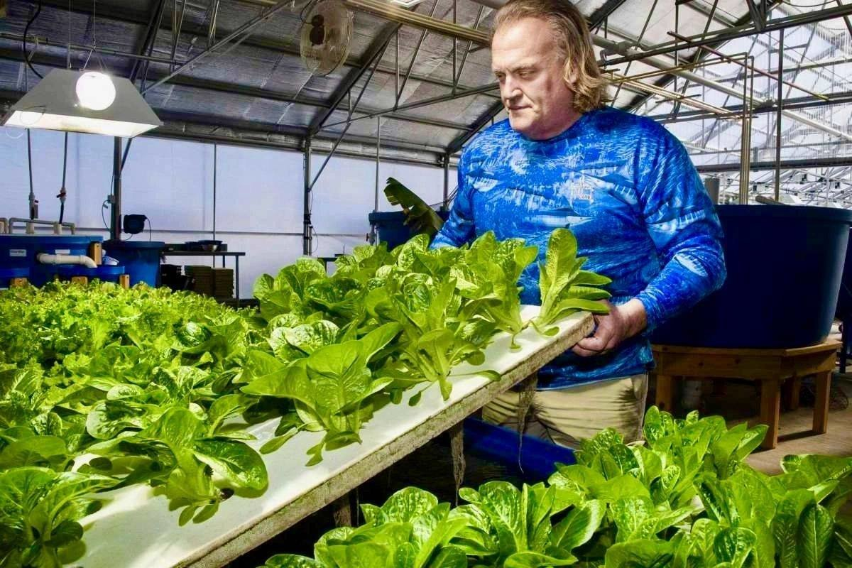 Douglas Wood, who owns 302 Aquaponics in Dover with his wife, Katie, will sell aquaponically grown lettuces, herbs, leafy greens, as well as farm-raised tilapia at Dover's artisan's market.