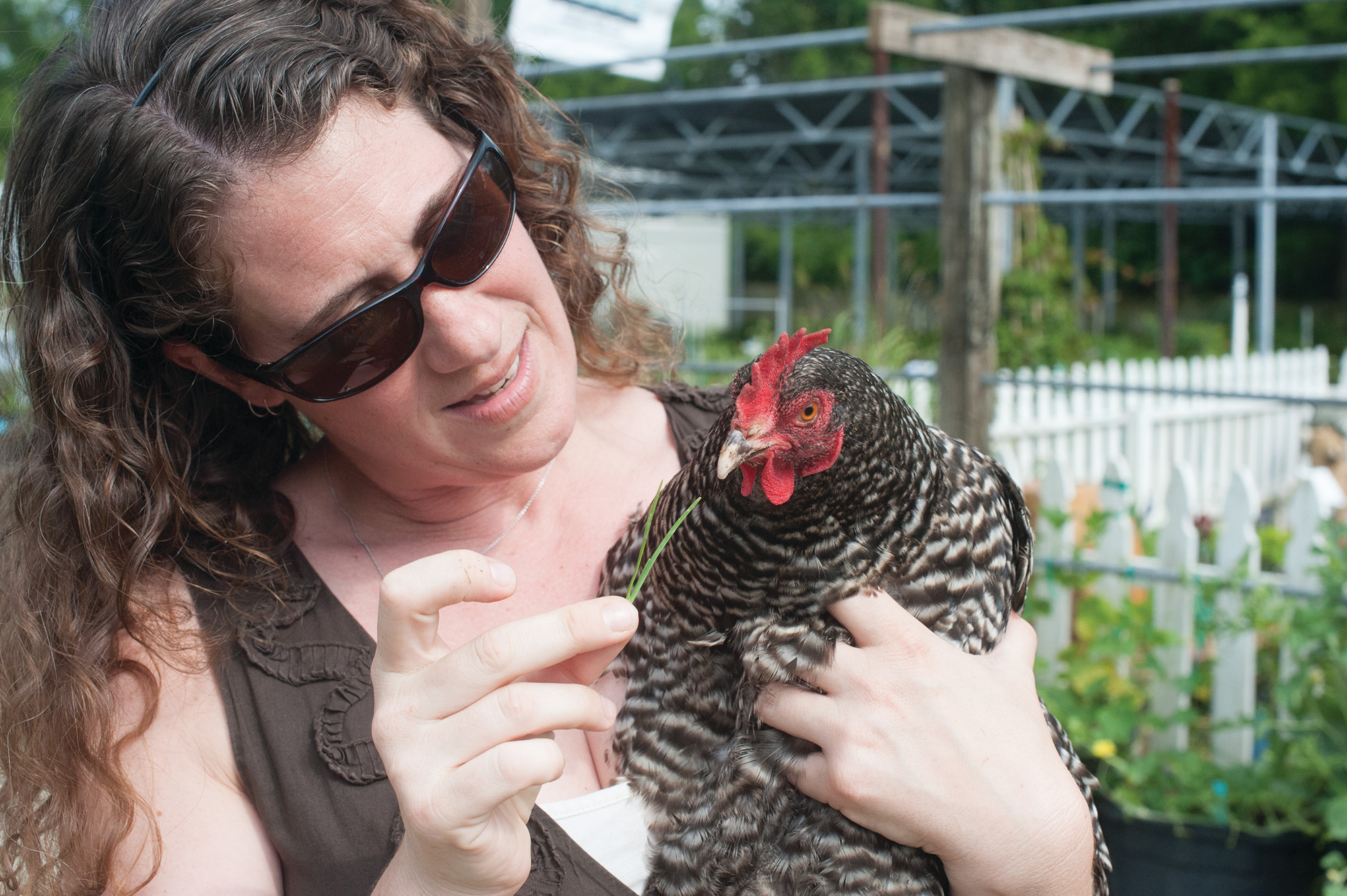 Lauren Trad feeds grass to a Plymouth Barred Rock named Pepper.