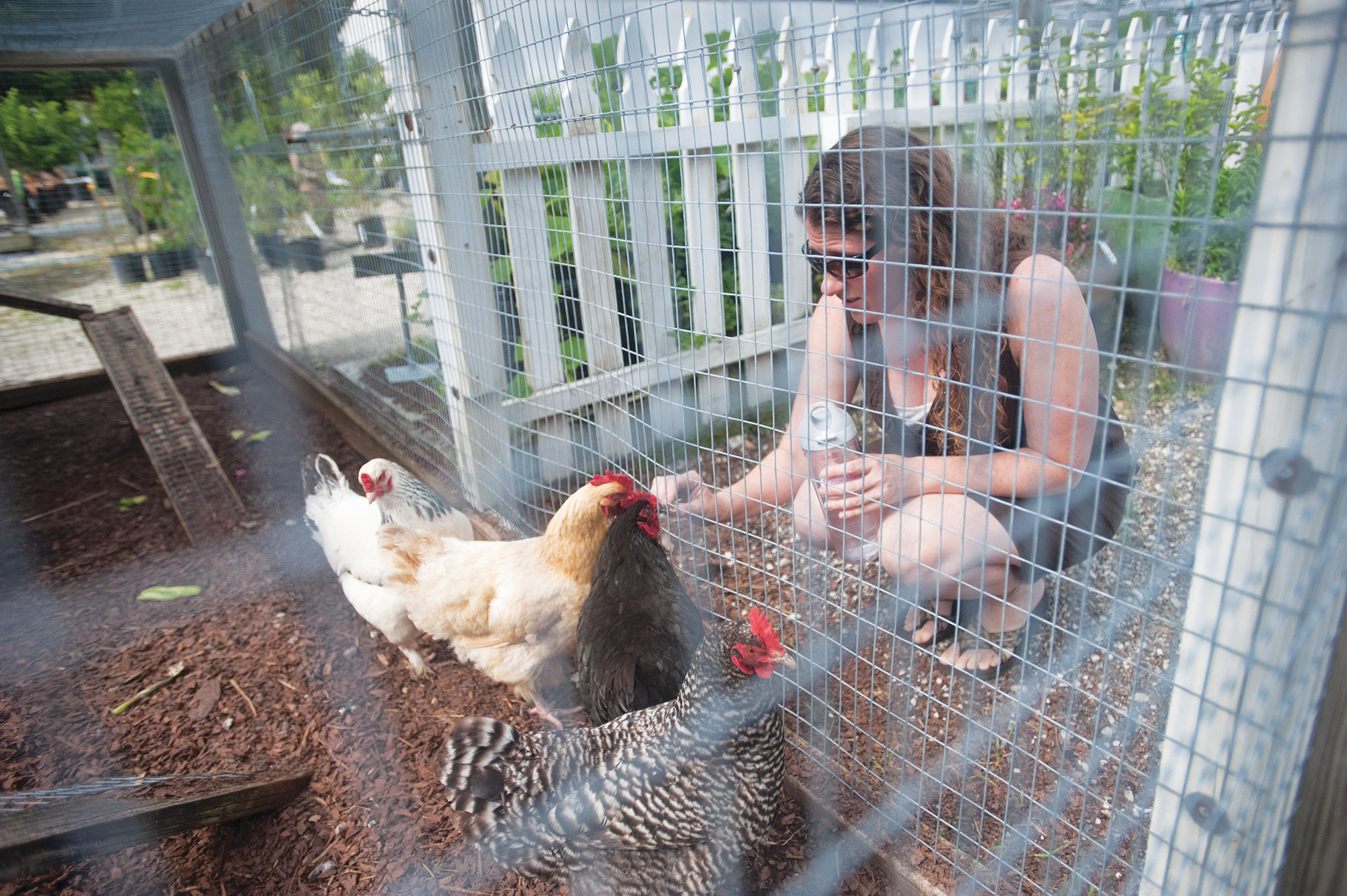 The chicken coop at Trad's Garden Center in Mandarin is one of the few to be grandfathered into the previous ordinance, making it legal.