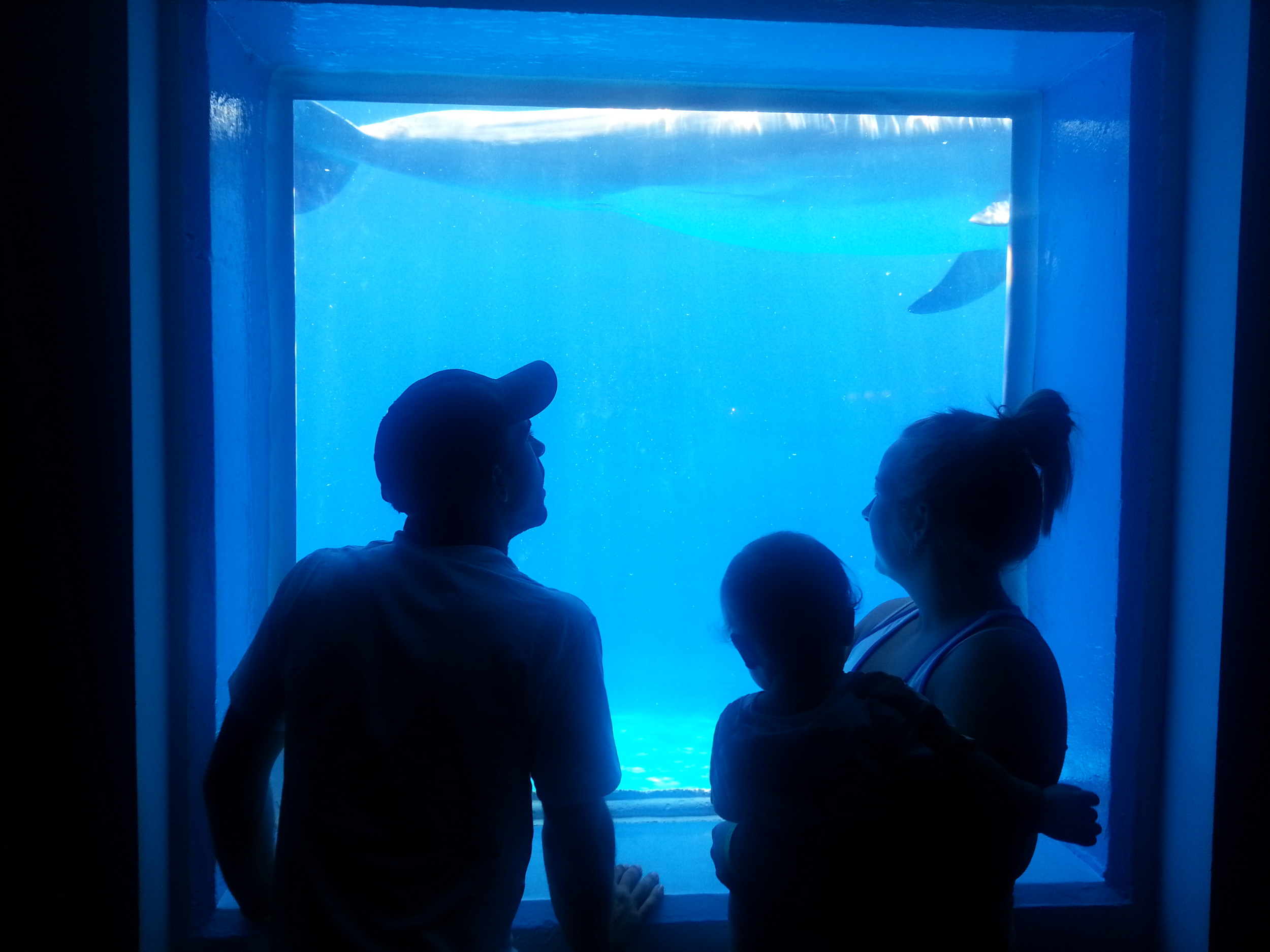 Visitors to Marineland get an underwater experience.