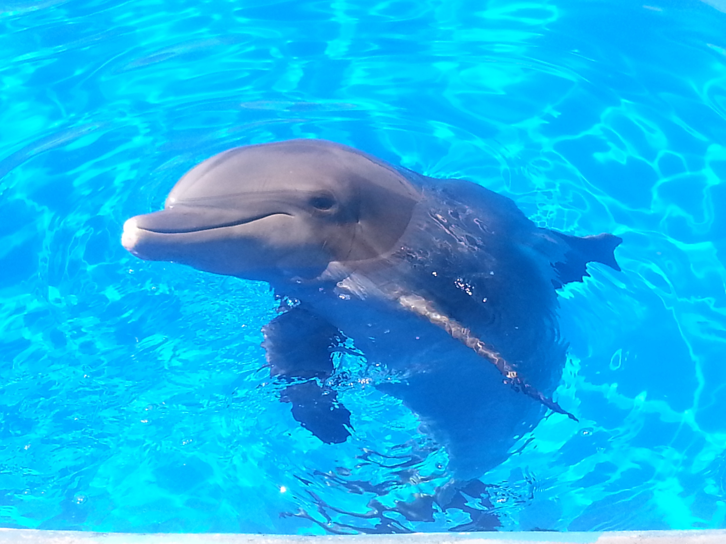 At 60, Nellie is the oldest living dolphin in human care.