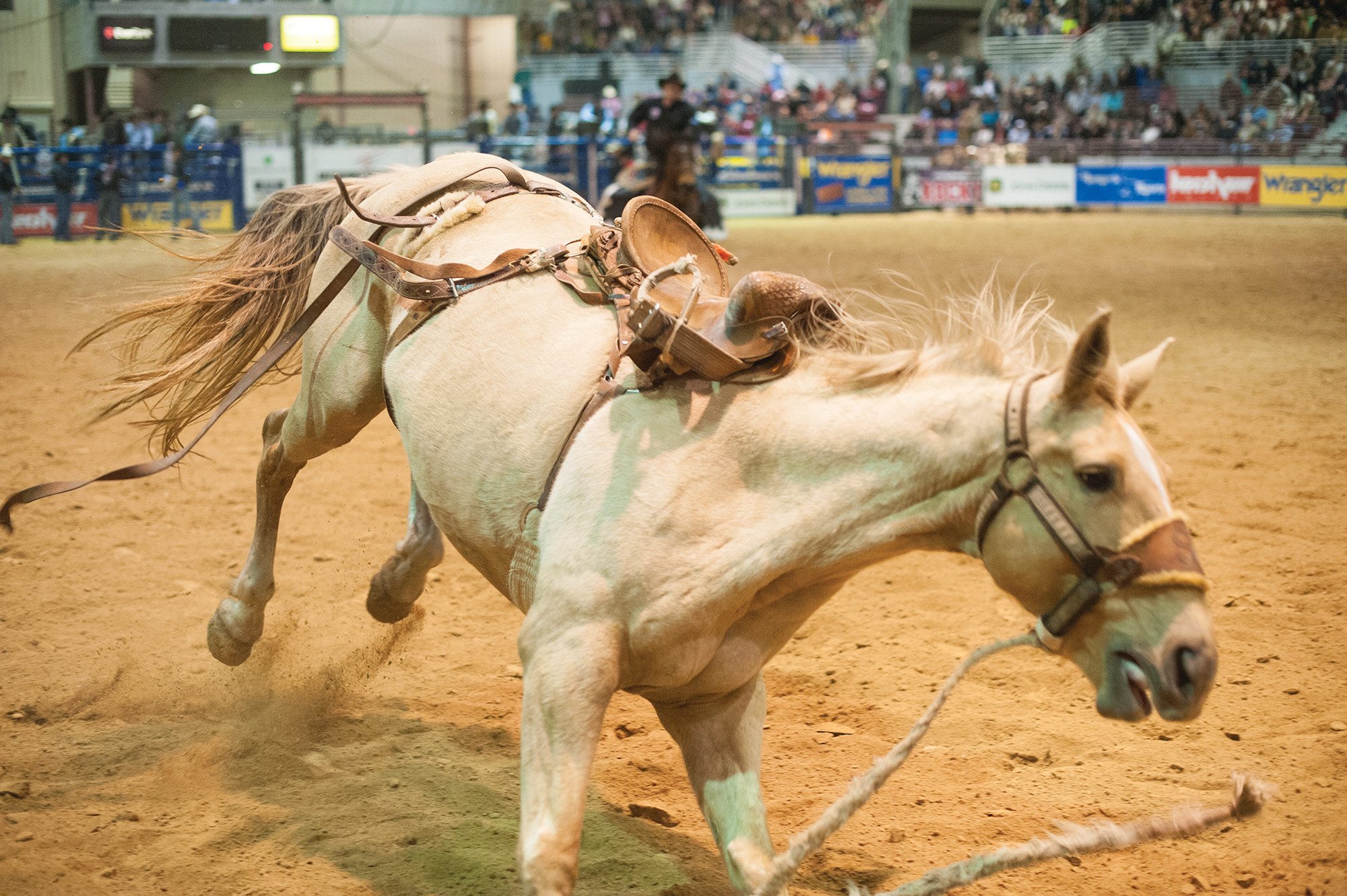 BUCK THIS: At the rodeo, if you don't ride, you don't get paid.